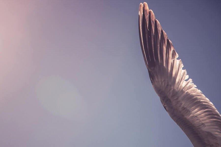qi-mindful qigong subscription classes bird wing